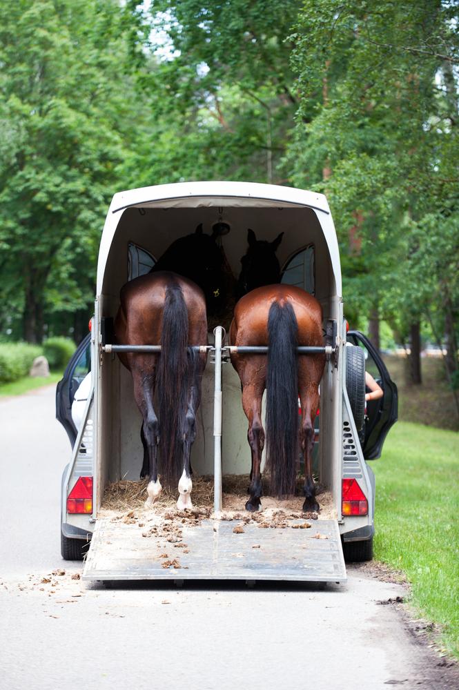 careliner paardentrailer